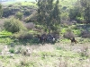 Damia spring