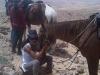 """""""Love story"""" in Judea desert"""